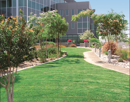 Picture of commercial landscaping services